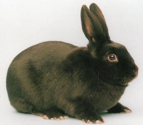 lapins datant